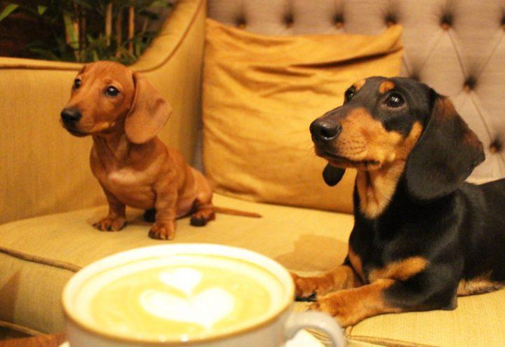 Dog Café KO-FI